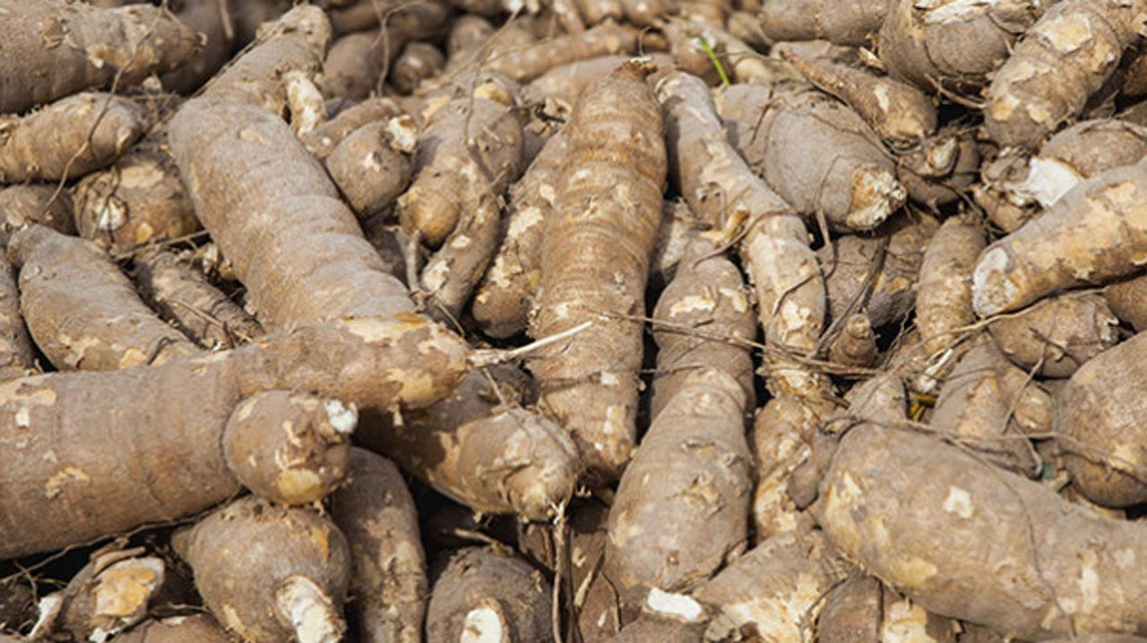 Africare upgrades cassava processing centres to gas plant