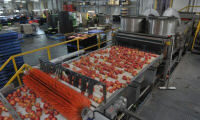 Federal Government agro-processing centres
