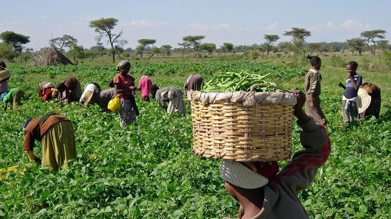 The Growth of Agricultural Sector in Nigeria