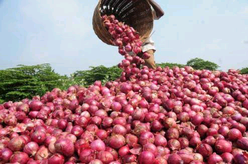 Onion Marketers Threaten to Stop Supply to Southern Nigeria
