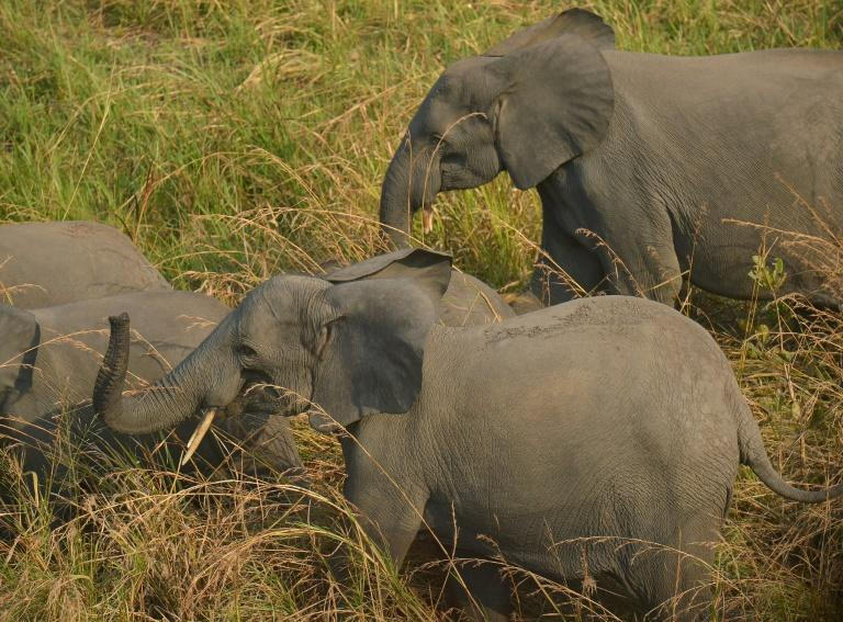 UNESCO Removes DR Congo Park from Endangered List