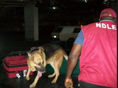 """FOU """"A"""" Hands Over Seized Cannabis Sativa Worth Over 1.7Billion to NDLEA"""